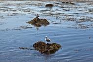 Asisbiz Bird rock area Pebble Beach area 17 Mile Drive Monterey California July 2011 05
