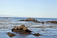 Asisbiz Bird rock area Pebble Beach area 17 Mile Drive Monterey California July 2011 06