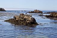 Asisbiz Bird rock area Pebble Beach area 17 Mile Drive Monterey California July 2011 08