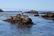 Asisbiz Bird rock area Pebble Beach area 17 Mile Drive Monterey California July 2011 09
