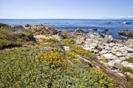 Asisbiz Coastal Flora Pebble Beach area 17 Mile Drive Monterey California July 2011 01