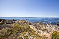 Asisbiz Coastal Flora Pebble Beach area 17 Mile Drive Monterey California July 2011 02