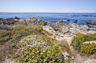 Asisbiz Coastal Flora Pebble Beach area 17 Mile Drive Monterey California July 2011 03
