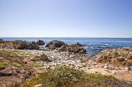 Asisbiz Coastal Flora Pebble Beach area 17 Mile Drive Monterey California July 2011 04