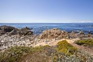 Asisbiz Coastal Flora Pebble Beach area 17 Mile Drive Monterey California July 2011 05
