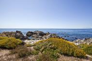 Asisbiz Coastal Flora Pebble Beach area 17 Mile Drive Monterey California July 2011 06