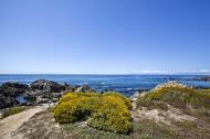 Asisbiz Coastal Flora Pebble Beach area 17 Mile Drive Monterey California July 2011 07