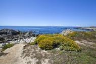 Asisbiz Coastal Flora Pebble Beach area 17 Mile Drive Monterey California July 2011 08