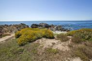 Asisbiz Coastal Flora Pebble Beach area 17 Mile Drive Monterey California July 2011 09