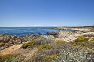 Asisbiz Coastal Flora Pebble Beach area 17 Mile Drive Monterey California July 2011 10