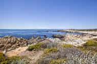 Asisbiz Coastal Flora Pebble Beach area 17 Mile Drive Monterey California July 2011 11