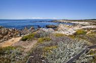 Asisbiz Coastal Flora Pebble Beach area 17 Mile Drive Monterey California July 2011 12