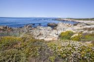 Asisbiz Coastal Flora Pebble Beach area 17 Mile Drive Monterey California July 2011 13