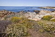 Asisbiz Coastal Flora Pebble Beach area 17 Mile Drive Monterey California July 2011 15