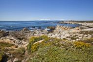 Asisbiz Coastal Flora Pebble Beach area 17 Mile Drive Monterey California July 2011 16
