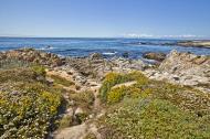 Asisbiz Coastal Flora Pebble Beach area 17 Mile Drive Monterey California July 2011 17