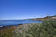 Asisbiz Coastal Flora Pebble Beach area 17 Mile Drive Monterey California July 2011 24