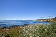 Asisbiz Coastal Flora Pebble Beach area 17 Mile Drive Monterey California July 2011 25
