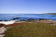 Asisbiz Coastal Flora Pebble Beach area 17 Mile Drive Monterey California July 2011 26
