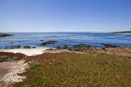 Asisbiz Coastal Flora Pebble Beach area 17 Mile Drive Monterey California July 2011 28