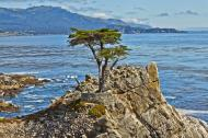 Asisbiz The Lonely Cypress Tree 17 Mile Drive Monterey California July 2011 05