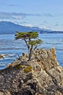 Asisbiz The Lonely Cypress Tree 17 Mile Drive Monterey California July 2011 07