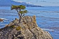 Asisbiz The Lonely Cypress Tree 17 Mile Drive Monterey California July 2011 08