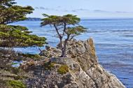 Asisbiz The Lonely Cypress Tree 17 Mile Drive Monterey California July 2011 09