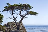 Asisbiz The Lonely Cypress Tree 17 Mile Drive Monterey California July 2011 10