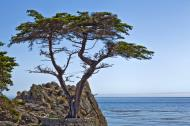 Asisbiz The Lonely Cypress Tree 17 Mile Drive Monterey California July 2011 11