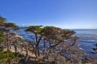 Asisbiz The Lonely Cypress Tree 17 Mile Drive Monterey California July 2011 29
