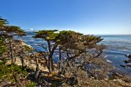 Asisbiz The Lonely Cypress Tree 17 Mile Drive Monterey California July 2011 30
