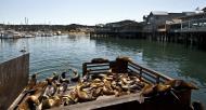Asisbiz California Sea Lion Zalophus californianus Old Fishermans Grotto Wharf Monterey 03