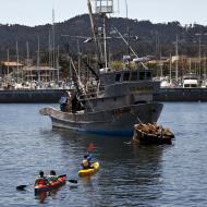 Asisbiz California Sea Lion Zalophus californianus Wharf 2 Monterey California July 2011 02