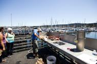 Asisbiz Old Fishermans Grotto Wharf fisherman processing the days catch Monterey CA 01
