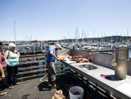 Asisbiz Old Fishermans Grotto Wharf fisherman processing the days catch Monterey CA 02