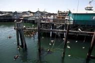 Asisbiz Old Fishermans Grotto Wharf restaurants viewd from the Marina Monterey CA 05