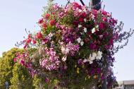 Asisbiz Sausalito boardwalk hanging flower pots Richardson Bay San Francisco California July 2011 01