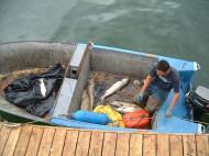 Asisbiz Washington Seattle Salmon Fishermen 04