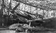 Asisbiz Messerschmitt Bf 109E4 2.JG1 Ingeborg Katwijk Holland 1940 01