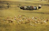 Asisbiz Messerschmitt Bf 109F4 RHAF experimental camouflage scheme 02