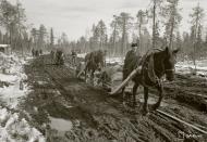 Asisbiz Finnish and German forces advance along the Kiestinki road towards Louhen 7th May 1942 87578