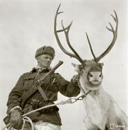 Asisbiz Finnish army reindeer unit Warriors of Lapland 4th May 1944 149983