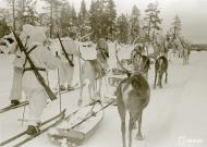 Asisbiz Finnish forcs moving forward with their reindeer Janiskoski area Winter War 20th Feb 1940 5140