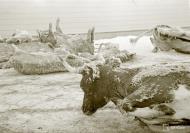 Asisbiz Winter conditions were saviour even cattle froze to death Karelia 1st Dec 1939 1859
