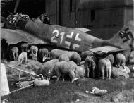 Asisbiz Focke Wulf Fw 190A8 5.JG301 White 21 WNr 682989 Germany 1945 02