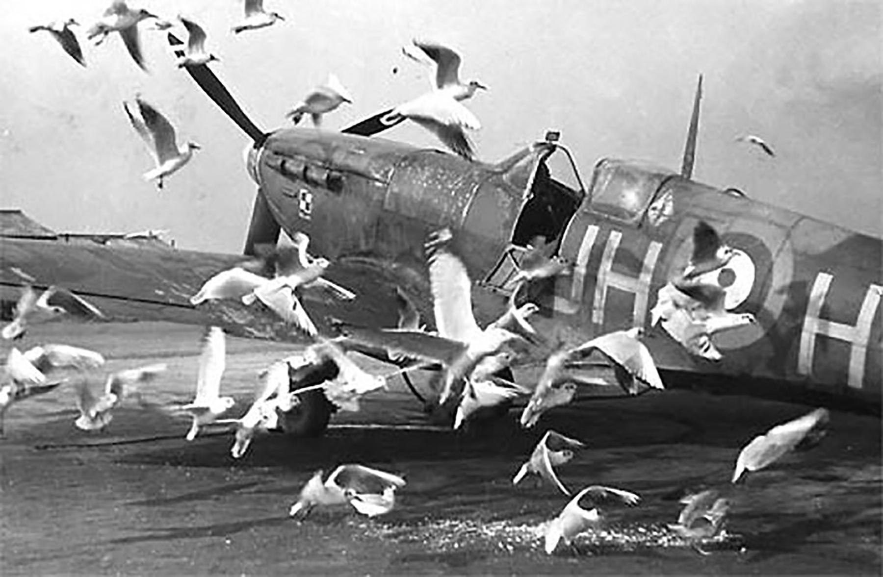 Spitfire MkVb RAF 317Sqn JHH PO Bochniak surrounded by seagulls AD140 Northolt 01