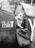 Asisbiz Spitfire MkVI RCAF 401Sqn YOF JK Ferguson BR159 England Aug 1942 01